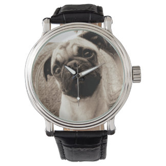 A Pug with its Head Titled to the Side Watch