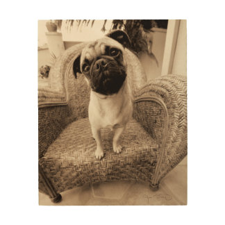 A Pug with its Head Titled to the Side Wood Print