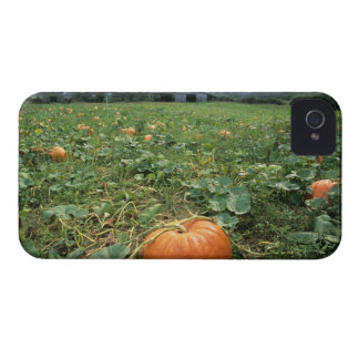 A pumpkin patch in Georgia. iPhone 4 Case