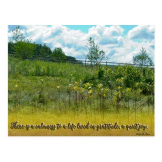 A Quiet Joy Postcard