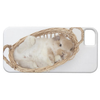 A rabbit is in a basket.Holland Lop. Case For The iPhone 5