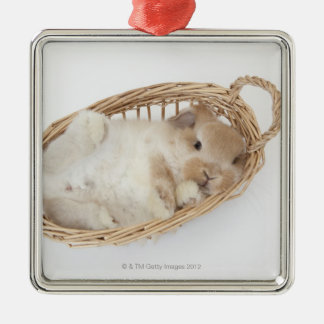 A rabbit is in a basket.Holland Lop. Christmas Ornament