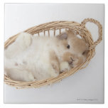 A rabbit is in a basket.Holland Lop. Large Square Tile
