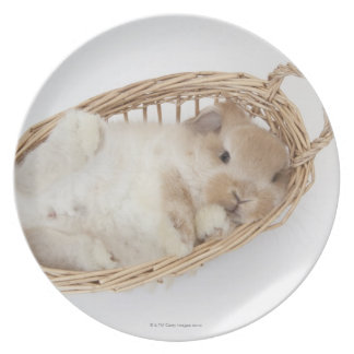 A rabbit is in a basket.Holland Lop. Plate
