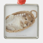 A rabbit is in a basket.Holland Lop. Silver-Colored Square Decoration
