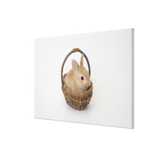 A rabbit is in a basket.Netherland Dwarf. Canvas Print