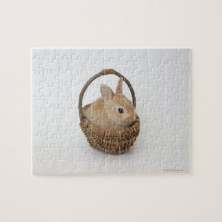 A rabbit is in a basket.Netherland Dwarf. Puzzle
