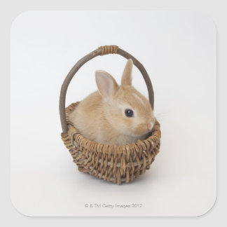 A rabbit is in a basket.Netherland Dwarf. Square Sticker