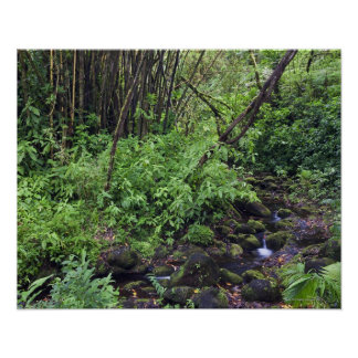 A rain forest includes ferns, a stream and poster