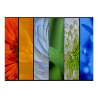 A Rainbow of Floral Poster