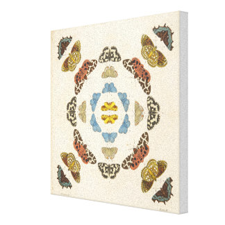A Rare Depiction of Butterflies and Moths Canvas Print