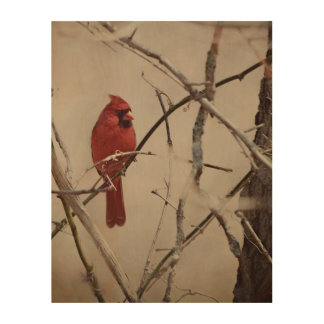 A Red Cardinal Bird on a Branch in the Woods Wood Print
