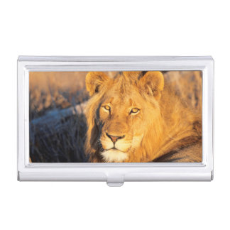 A Red Maned Lion looking at the camera. Business Card Holder