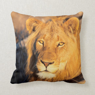 A Red Maned Lion looking at the camera. Cushion