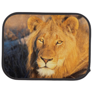A Red Maned Lion looking at the camera. Floor Mat