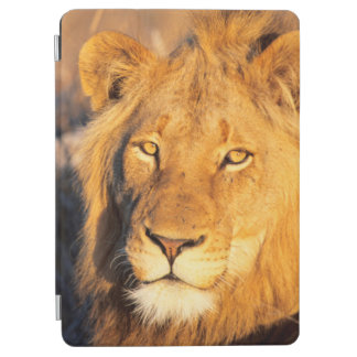 A Red Maned Lion looking at the camera. iPad Air Cover