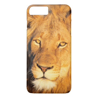 A Red Maned Lion looking at the camera. iPhone 8 Plus/7 Plus Case