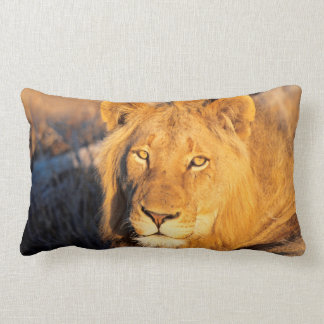 A Red Maned Lion looking at the camera. Lumbar Cushion