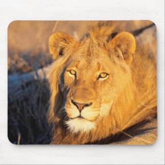 A Red Maned Lion looking at the camera. Mouse Pad