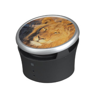A Red Maned Lion looking at the camera. Speaker