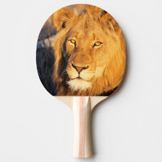 A Red Maned Lion looking at the camera. Ping Pong Paddle