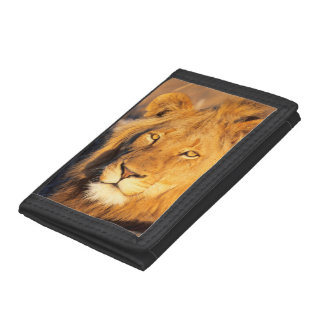 A Red Maned Lion looking at the camera. Tri-fold Wallet
