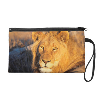A Red Maned Lion looking at the camera. Wristlet