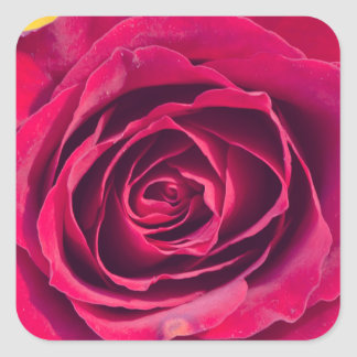 A red rose square sticker