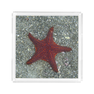 A Red Starfish | Galapagos, Equador Acrylic Tray
