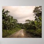 A remote jungle road print