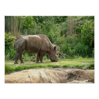 A Rhino Poster