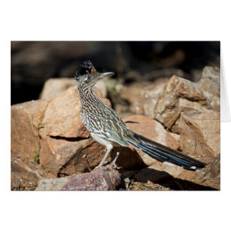 A Road runner pauses momentarily on its search Card