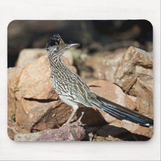 A Road runner pauses momentarily on its search Mouse Mat