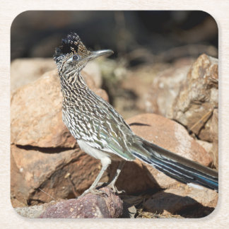 A Road runner pauses momentarily on its search Square Paper Coaster