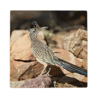 A Road runner pauses momentarily on its search Wood Coaster