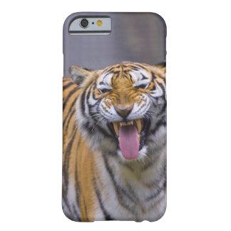 A roaring tiger, Taiwan, Taipei, Taipei Zoo Barely There iPhone 6 Case