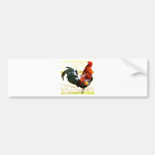 A Rooster Bumper Sticker