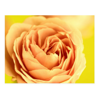 A rose by any other name is still a rose.JPG Postcard