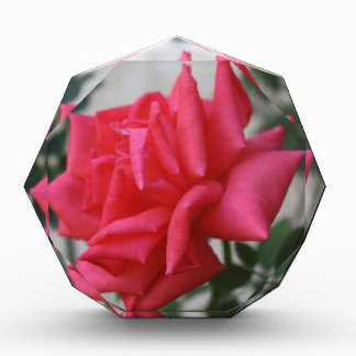 A Rose Of Peace=multi-products, home-business-Etc