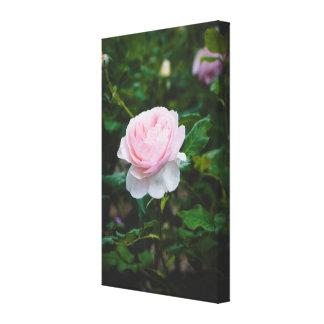 A roses garden canvas print
