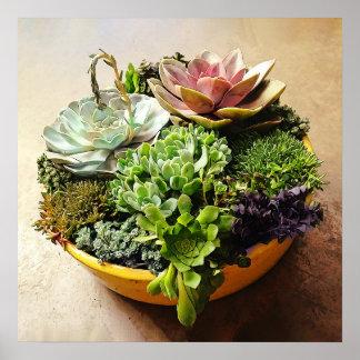 A Salad Bowl of Succulents Poster