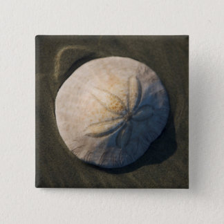 A Sand Dollar On The Beach 15 Cm Square Badge