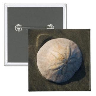 A Sand Dollar On The Beach 15 Cm Square Badge