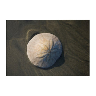 A Sand Dollar On The Beach Acrylic Print