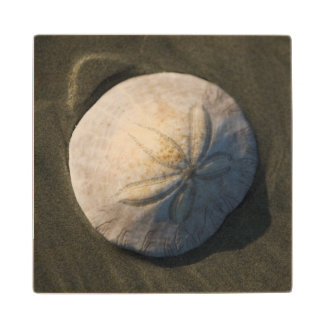 A Sand Dollar On The Beach Wood Coaster
