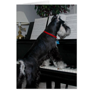 A Schnauzer at the piano Card