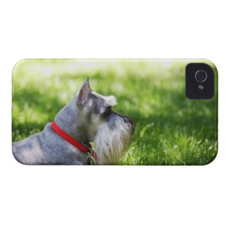 A Schnauzer laying in the grass iPhone 4 Cases