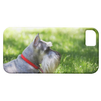 A Schnauzer laying in the grass iPhone 5 Cases