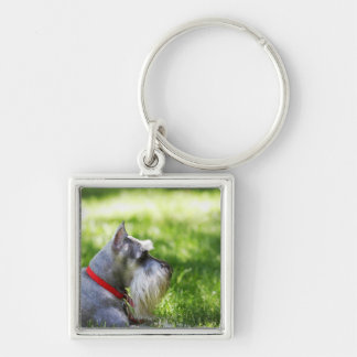 A Schnauzer laying in the grass Silver-Colored Square Key Ring
