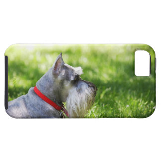 A Schnauzer laying in the grass Tough iPhone 5 Case